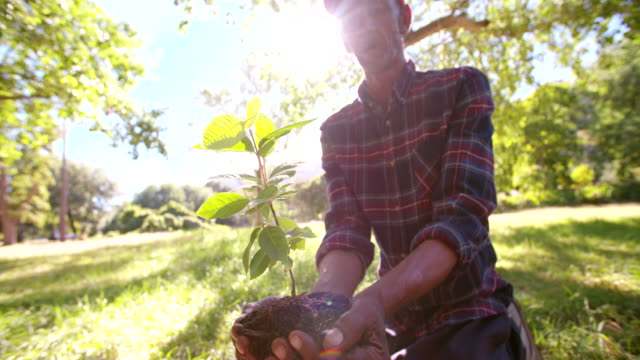 Soil and sunlight for a new Spring tree video