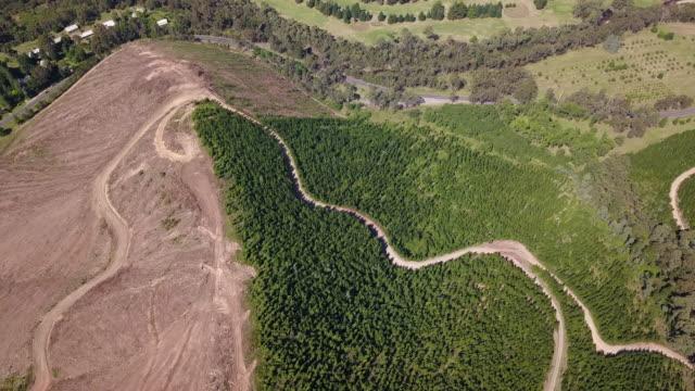 vídeos de stock, filmes e b-roll de desflorestamento e erosão do solo - erodido