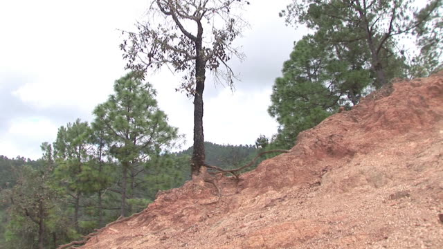 Soil erosion hillside, tree with exposed roots video