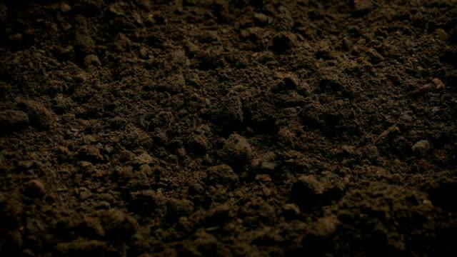 soil ground närbild moving shot - torv bildbanksvideor och videomaterial från bakom kulisserna