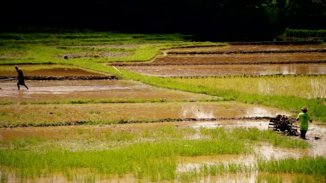 Soil Preparation for Planting Rice video