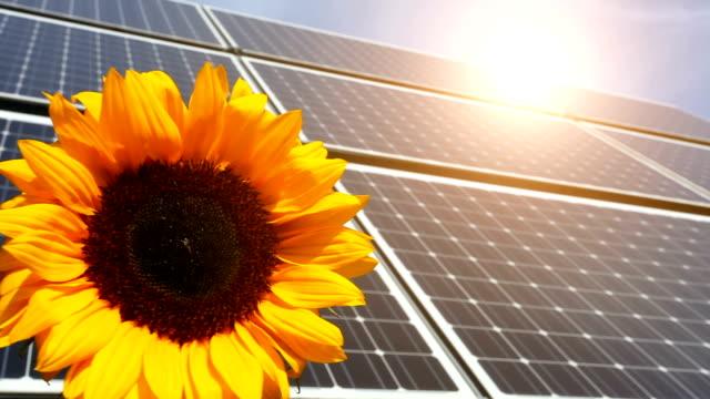 Solarpaneele mit Sonnenblume – Video