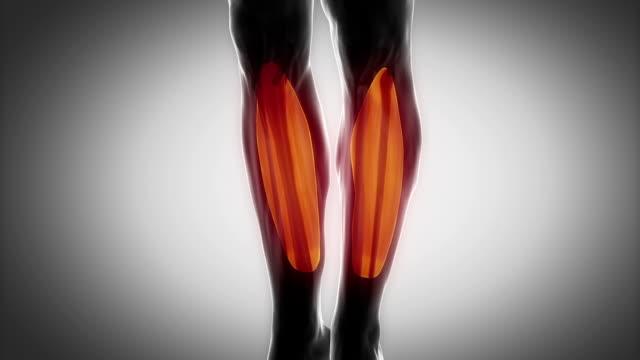 ヒラメ筋-筋肉部位にブラック - 人の筋肉点の映像素材/bロール