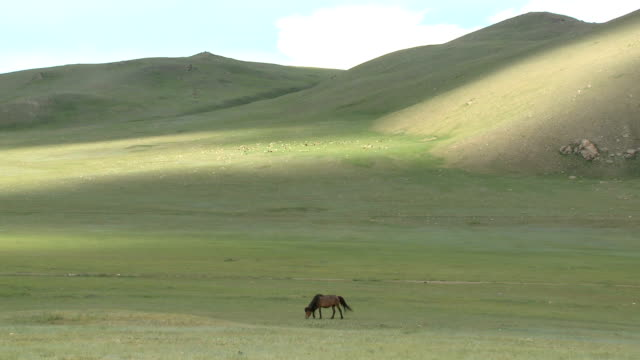 Solitary Horse Grazing On Mongolian Steppe video