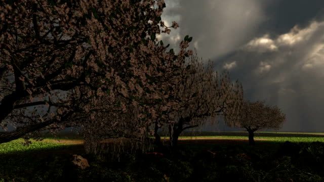 Solitary Rain Storm Cherry Tree Orchard Dramatic Sky Clouds Lightning video