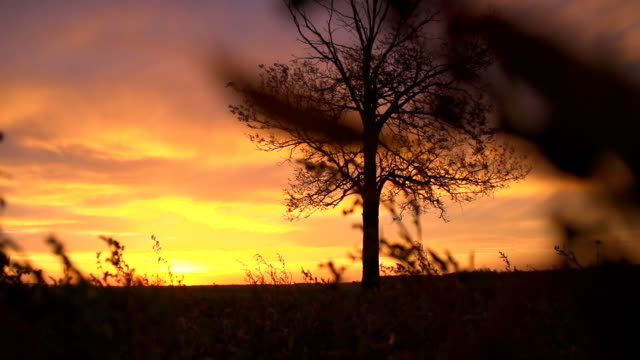 SLO MO Solitary Tree At Dusk video