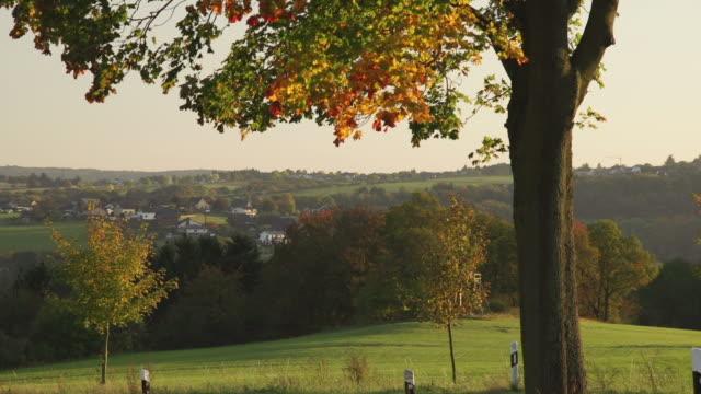 クレーンアップ:兼ね秋の木 - 里山点の映像素材/bロール