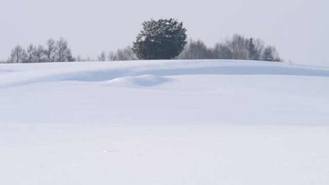 solitary träd i en snöfält, biei, hokkaido, japan - hokkaido bildbanksvideor och videomaterial från bakom kulisserna