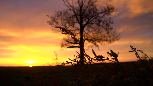 SLO MO Solitary Tree In The Dusk video