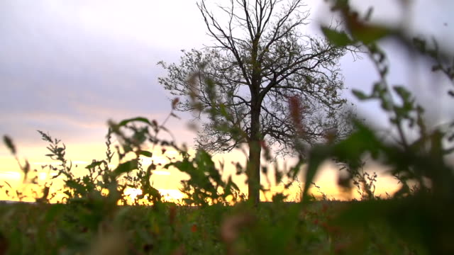 SLO MO Solitary Tree In The Sunset video