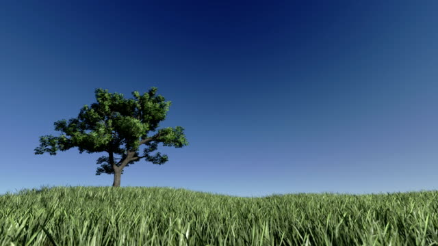 Solitary Tree on Green Meadow against blue sky video