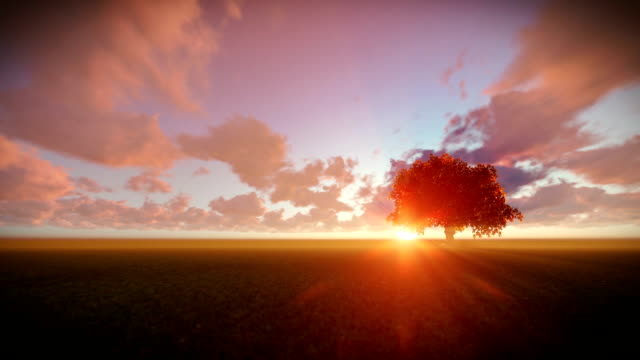 Solitary tree on green meadow, timelapse sunset video