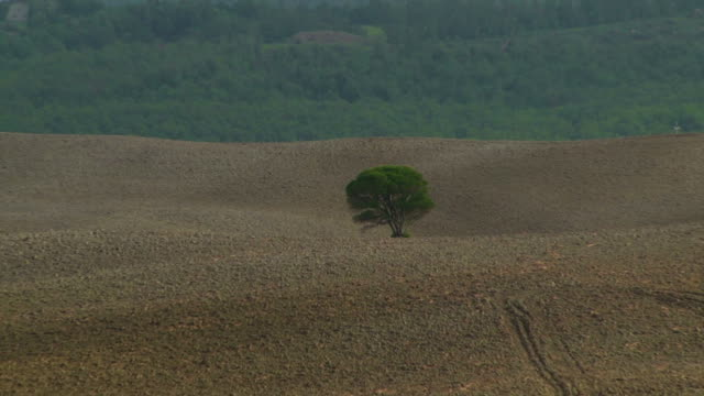 Solitude on Tuscany hills Zoom out from a single tree on a field just plowed to the autumn hills of Tuscany, Italy, on the light morning haze cultivated land stock videos & royalty-free footage