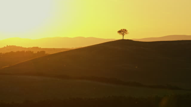 Solitude tree in Tuscan countryside video