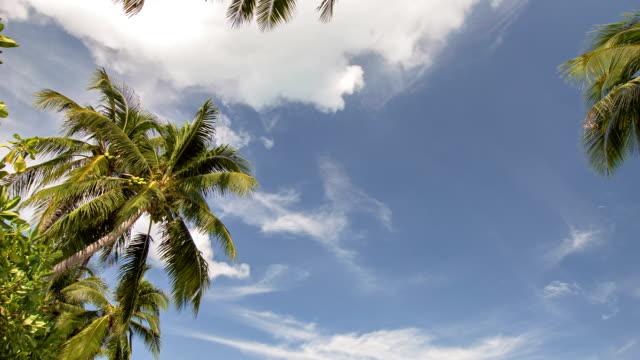 alcuni palme e il cielo - antsiranana video stock e b–roll