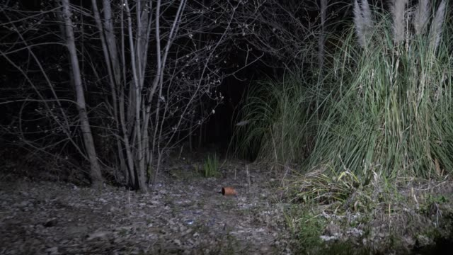 someone is walking through the forest, illuminating the road with a 4k hand lantern. Shimmering Shadows someone is walking through the forest, illuminating the road with a 4k hand lantern. Shimmering Shadows. bay window stock videos & royalty-free footage