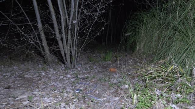 någon promenader genom skogen, lysande vägen med en 4 k-handlampa. skimrande skuggor - liten skog bildbanksvideor och videomaterial från bakom kulisserna