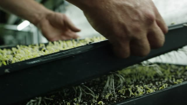 Someone Picks Up a Tray of Plants A pair of Caucasian hands pick up a tray of sprouting plants and places them to the side in a warehouse. hydroponics stock videos & royalty-free footage
