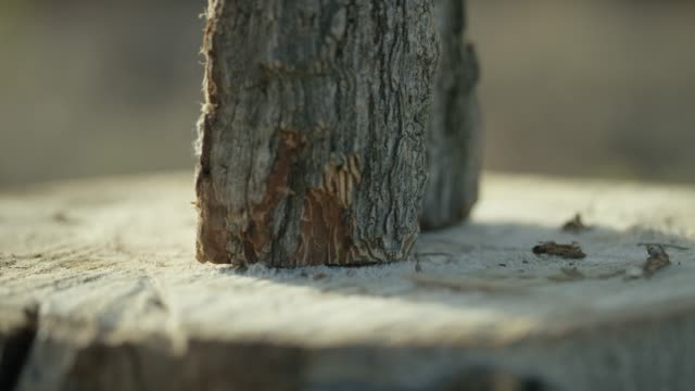Someone Places a Log on a Stump for Splitting Someone positions a piece of wood vertically on a tree stump for splitting. firewood stock videos & royalty-free footage
