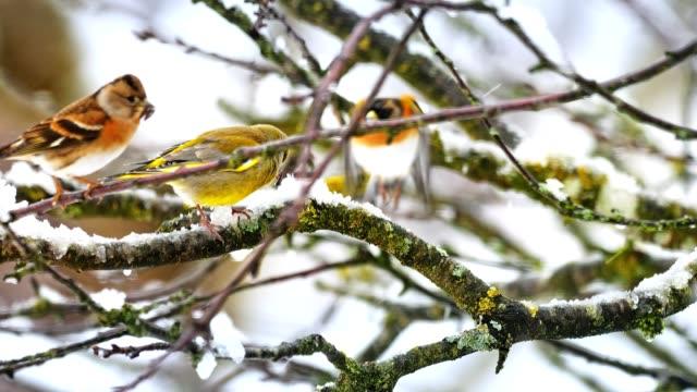 Songbirds on tree in winter