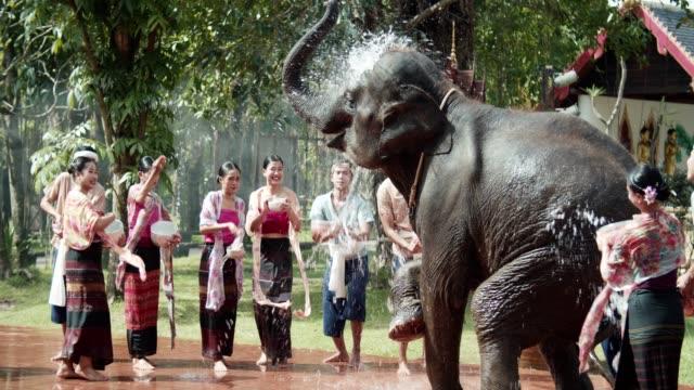 stockvideo's en b-roll-footage met songkran, speelse spetterend water met elaphant - oost aziatische cultuur