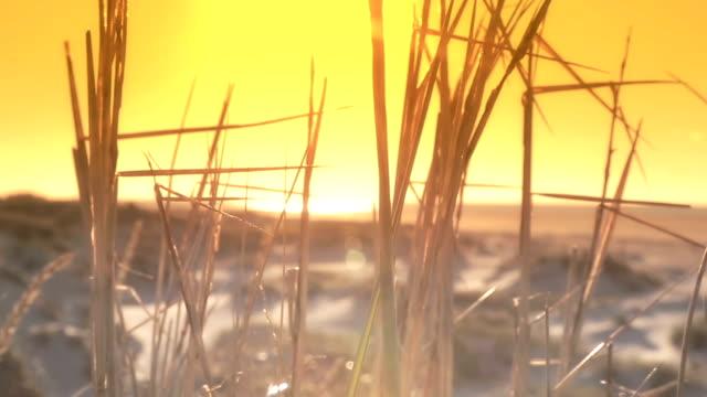 sunset cup coral am strand - rohrblattinstrument stock-videos und b-roll-filmmaterial