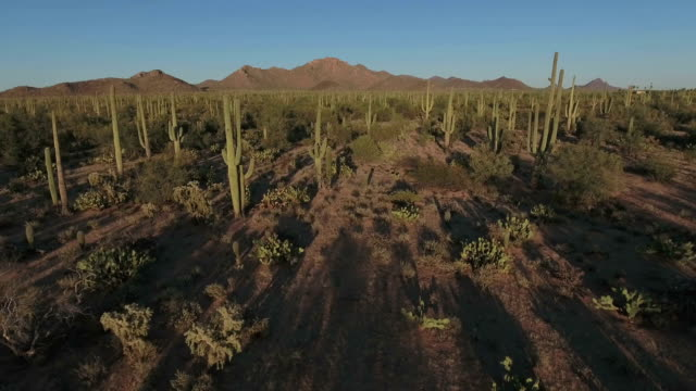 Sonoran desert aerial footage video