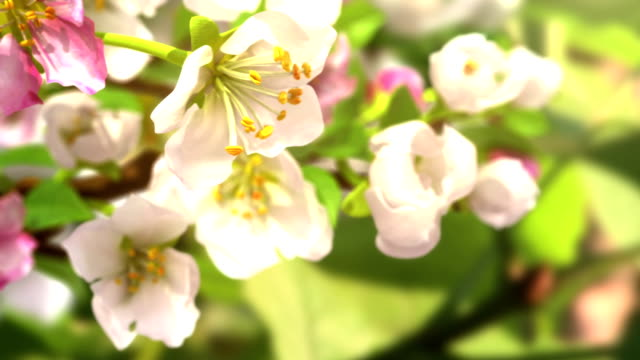 presto la primavera - fiori video stock e b–roll