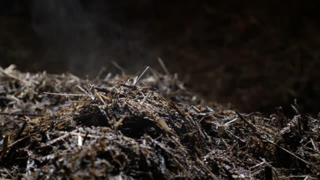 Source of energy in nitrogen rich soil fertilizer video