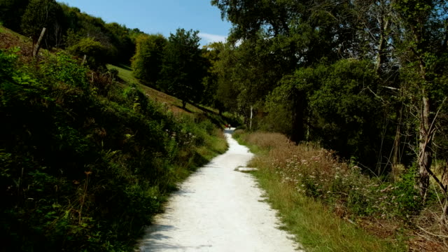 south downs national park, west sussex, england, uk - sussex occidentale video stock e b–roll