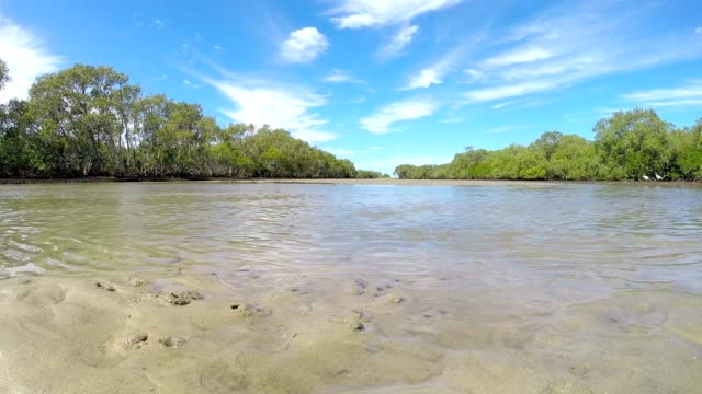 South East Queensland Australia Pristine Idyllic Island Mangrove Stream video