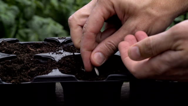 Sowing Seeds In The Spring video