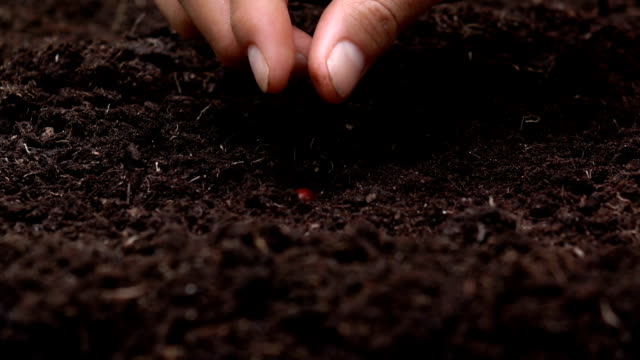 Sowing the seeds , Planting a tree for save the earth and natural , clean ecology in natural.