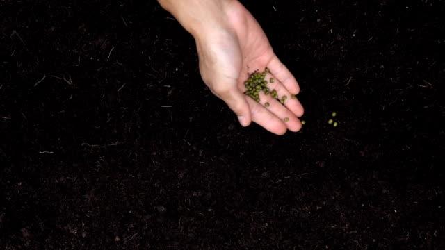 vídeos de stock e filmes b-roll de sowing the seeds. - semente