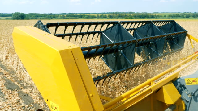 Soy. Harvesting soybeans . Seed harvester threshes soybeans seeds for future sowing video