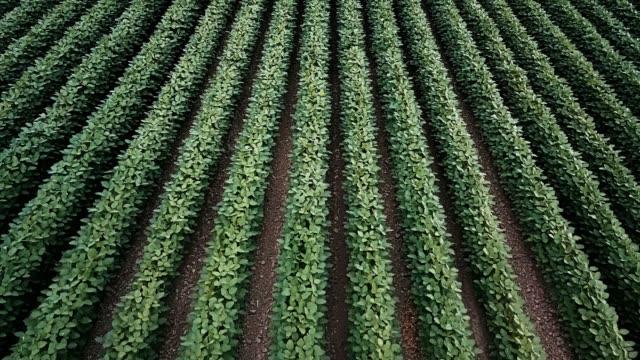 vídeos y material grabado en eventos de stock de campo de soja - plantación
