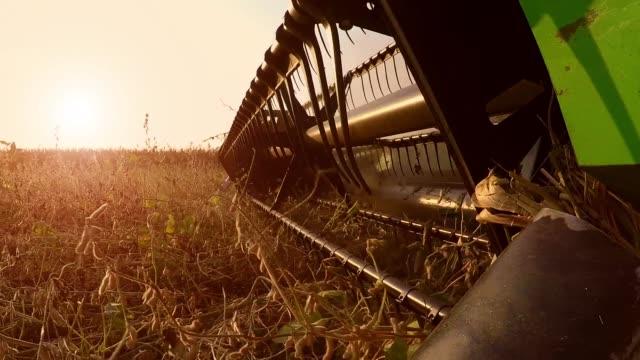 vidéos et rushes de récolte de soja en automne coucher du soleil. cardan stock vidéo. - équipement agricole