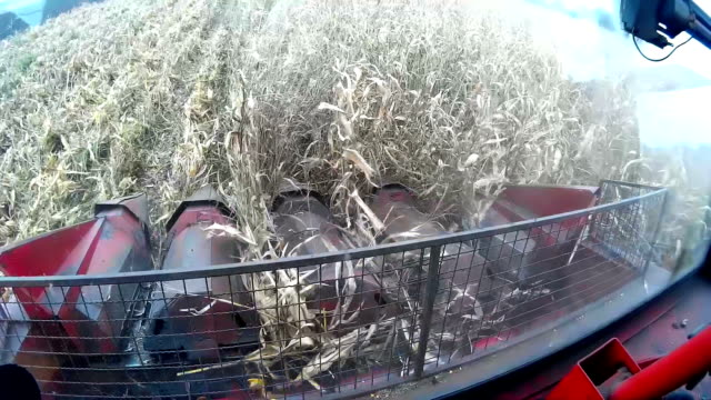 Soybean harvest video