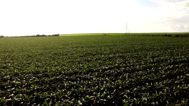 soybean plantation view aerial video