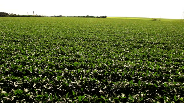 vídeos de stock, filmes e b-roll de antena de visão de plantação de soja - plantação