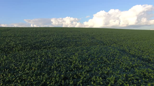 soybean plantation with sky on the horizon sunset aerial view video
