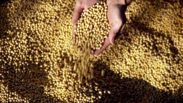 Soybeans and Hands video