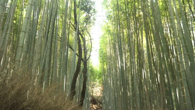 space between treetop of Arashiyama Bamboo Forest in Kyoto, Japan video