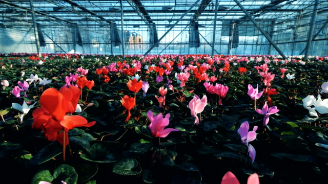 spacious greenhouse with plenty of bright flowers - earth day stock videos and b-roll footage