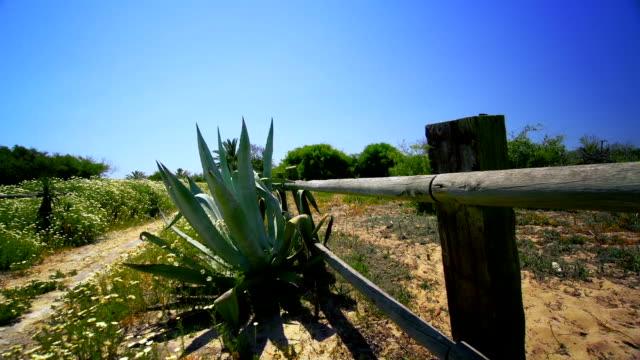 Spanish landscape, dolly shot video