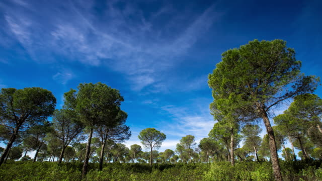 Spanish Woodland in the Morning - Time Lapse video