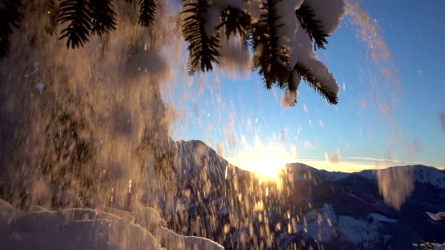 SLOW MOTION: Sparkling snowflakes falling from spruce branch at golden sunset video