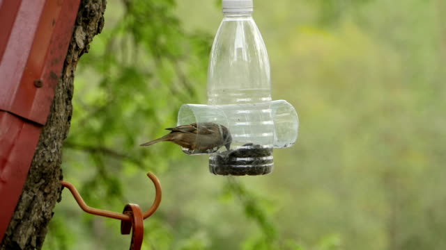 sparrow at bird feeders with seeds - ornitologia video stock e b–roll