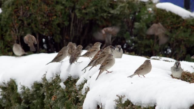 Sparrow Family video