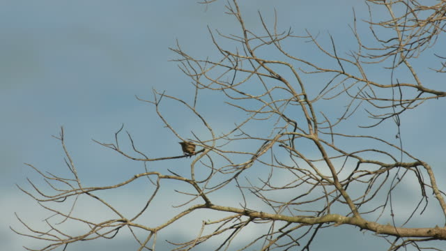 sparrow on the canopy video